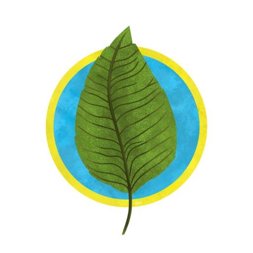 140419_leaf